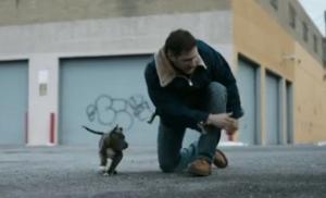 tom hardy w dog drop