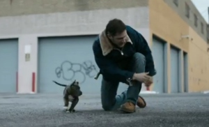 tom hardy w dog drop
